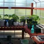 greenhouse interior shelving
