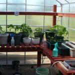 greenhouse interior shelving